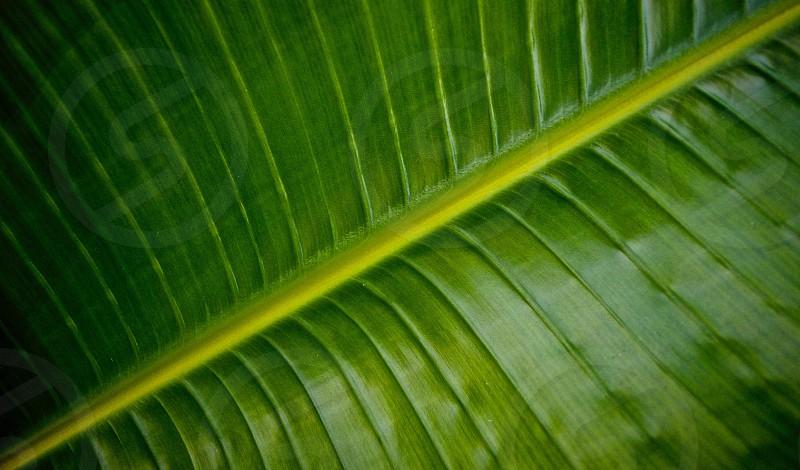 close up photography of green banana leaf photo