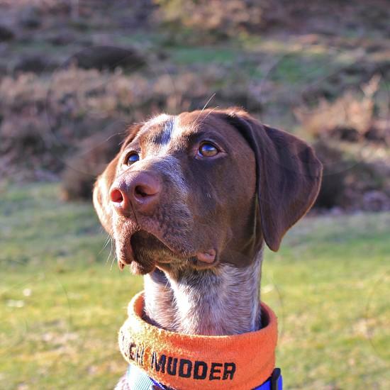 Tough Mudder Pup!  photo