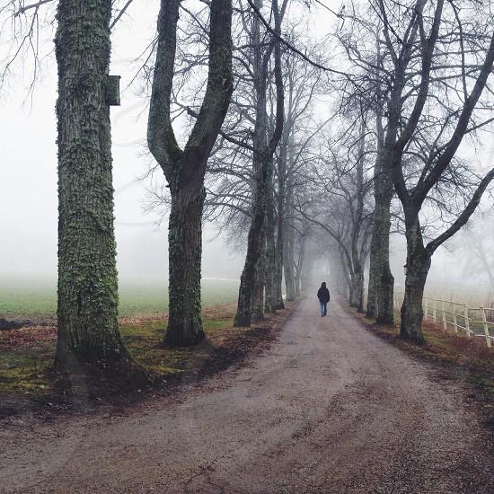 person walking along foggy dirt path photo photo