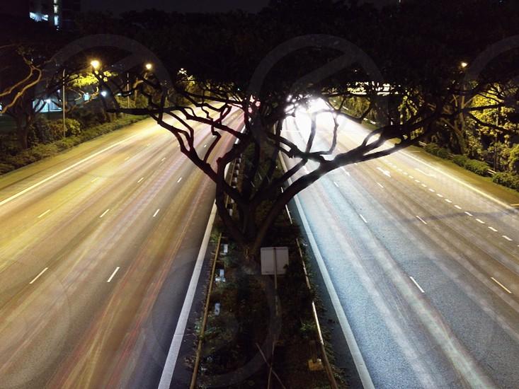 trees in the medium panning photo photo