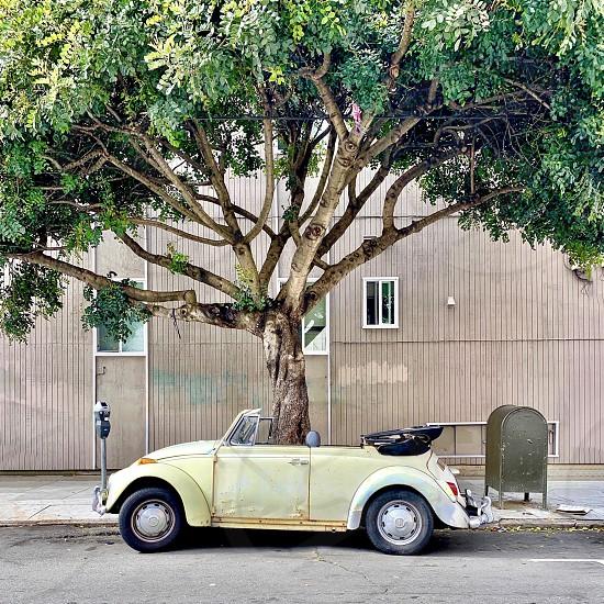 Parked car tree photo
