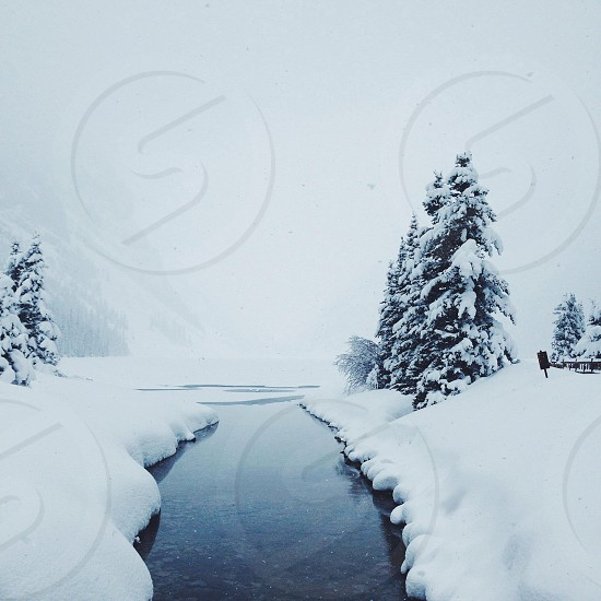river inbetween snowy riverbanks and pine trees photo