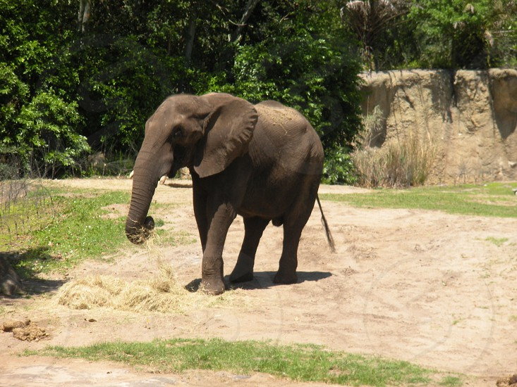 Elephant animal photo