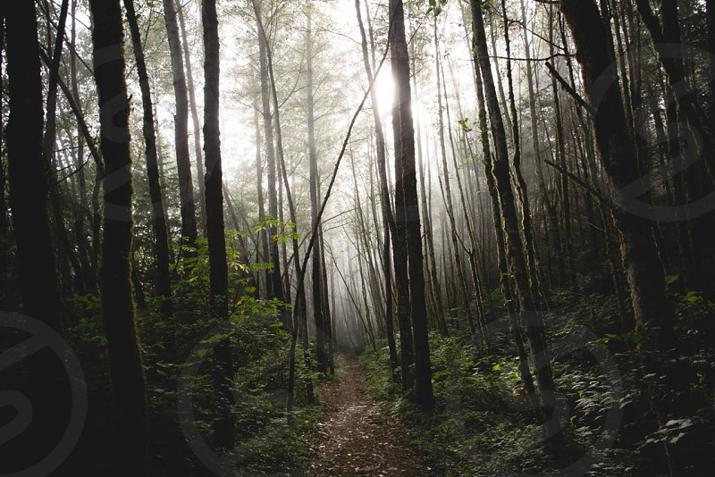 brown pathway in forest photo