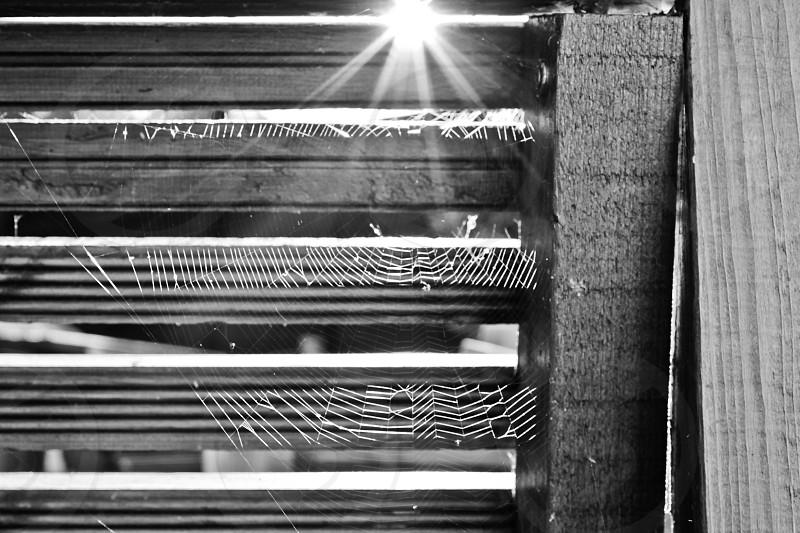 Cobweb in the Sunshine photo