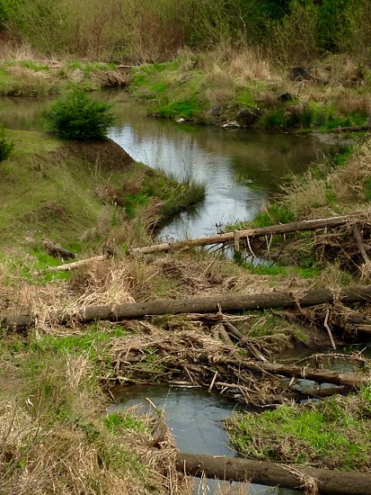 Pond in Tigard Oregon  photo