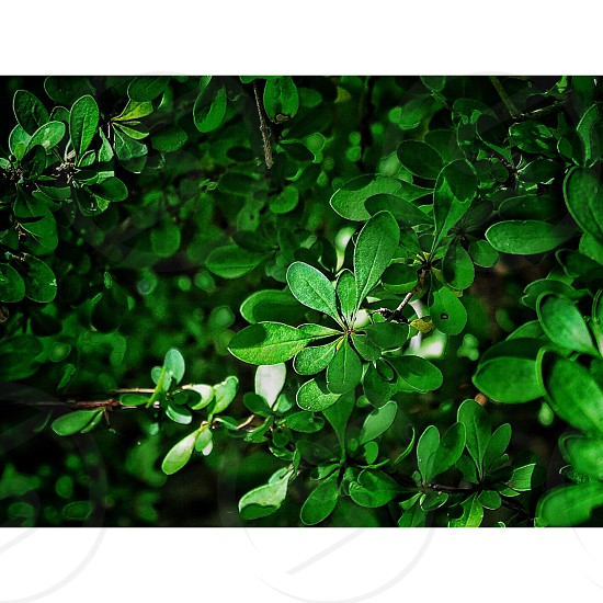 close up photography of green ovate leaf plant photo