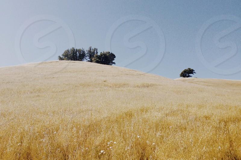 brown grassland photo