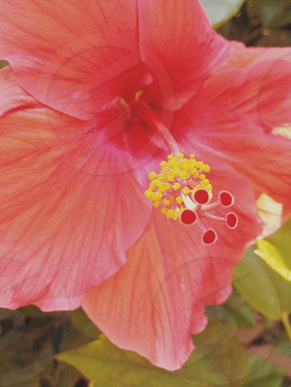 Florida flowers  photo
