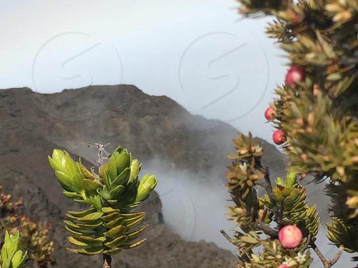 Cloud mountain plant nature Hawaii maui photo