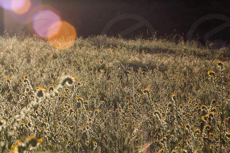 Field of sun photo