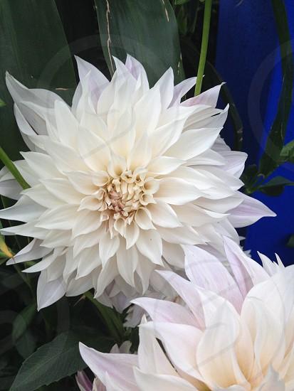 White flower garden botanical  photo