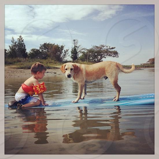 Boy dog surfing swimming summer beach creek photo