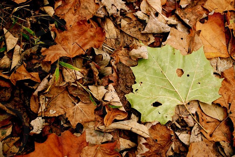 Nature Autumn Leaves Macro.  photo