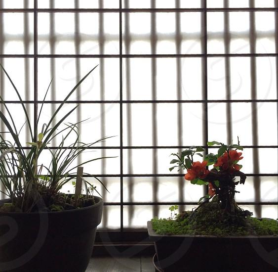 green bonsai photo