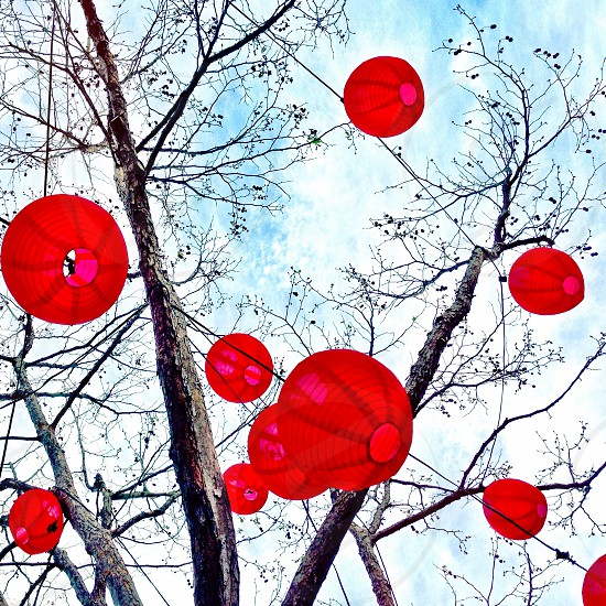 Paper lanterns in tree photo