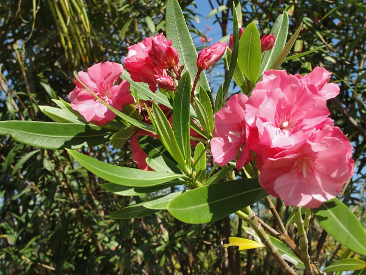 pink outdoor flower photo