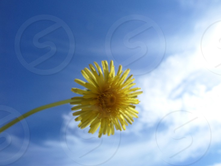 "Blue skies...yellow ""flower"" photo"