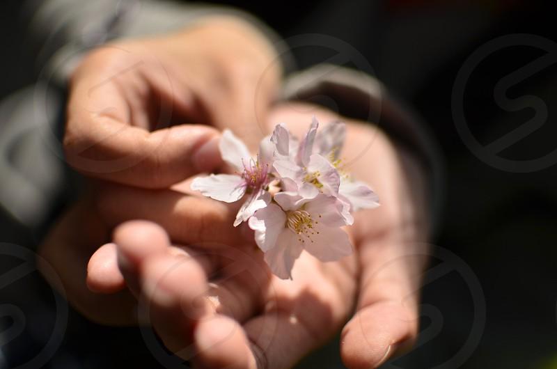 Flower in her hand photo