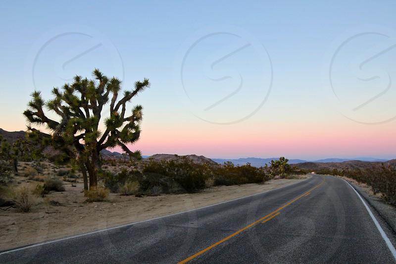 Joshua Tree California photo