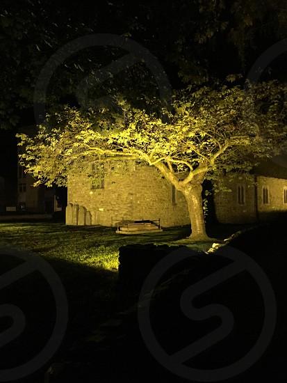 Backlit tree in churchyard at night.  photo