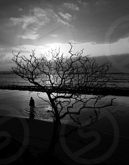 man beside leafless tree photo