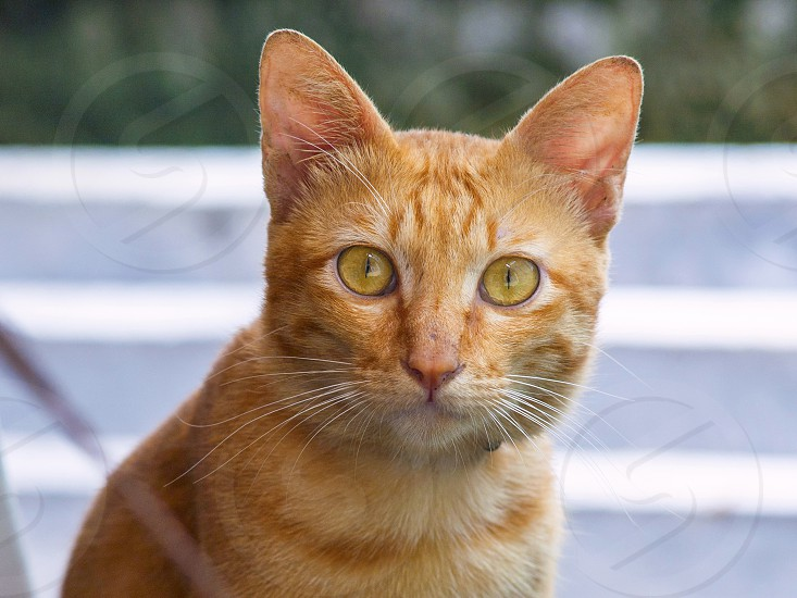 The cat is a smart nimble cute creature and its eyes are glittering like two ticks photo