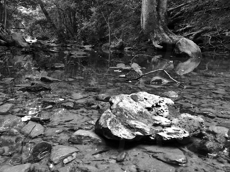 Black and White Landscape of Creek photo