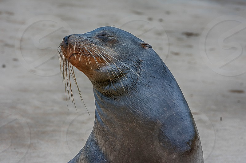 Sea Lion photo