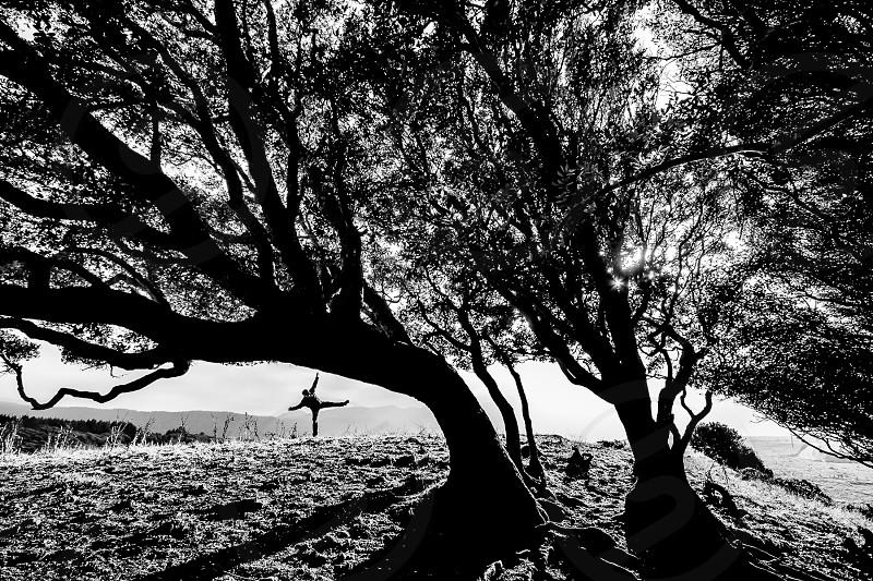 Bolinas ridge landscape california marin man at play sunlight sunset silhouette  photo