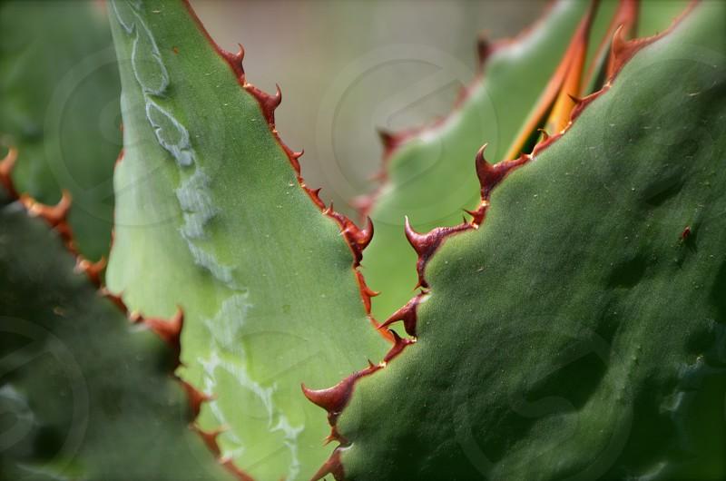 Details of a cactus... photo