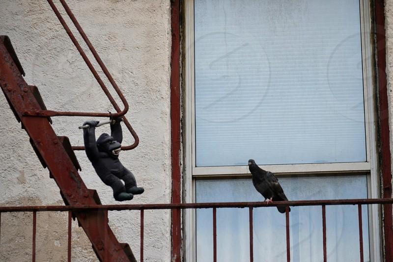 black gorilla plastic toy hanged on brown metal wire facing black bird photo