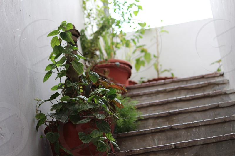 staircase with plants pot photo