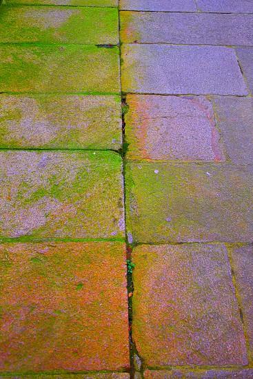 Santiago de Compostela end of Saint James Way moss detail on soil photo