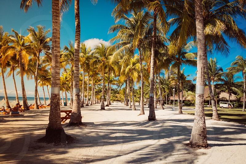 Landscape beach palm tree Asia  photo