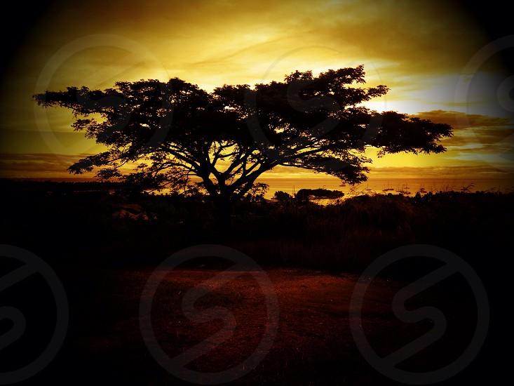 Tree Musket Cove Fiji photo