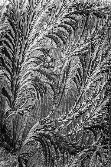 Jack frost etching beautiful pattern converted to look like a pencil drawing with swirling patterns made by nature. photo
