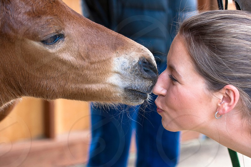 Kisses from a colt photo