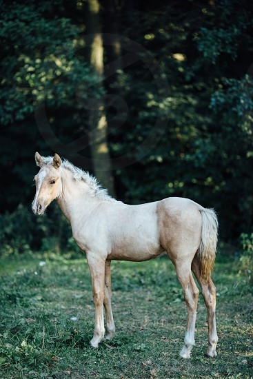 Horse standing in forest photo