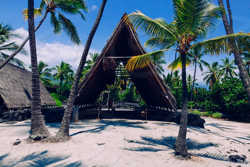 green coconut tree in front of hut photo