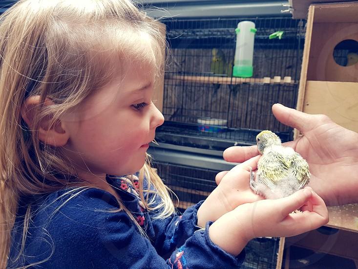 Little girl holding a baby bird photo