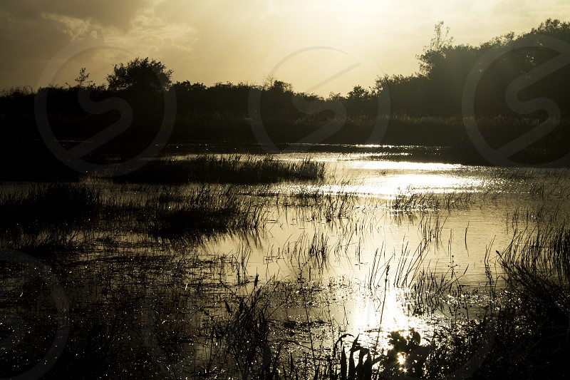 Everglades in late afternoon sun  photo