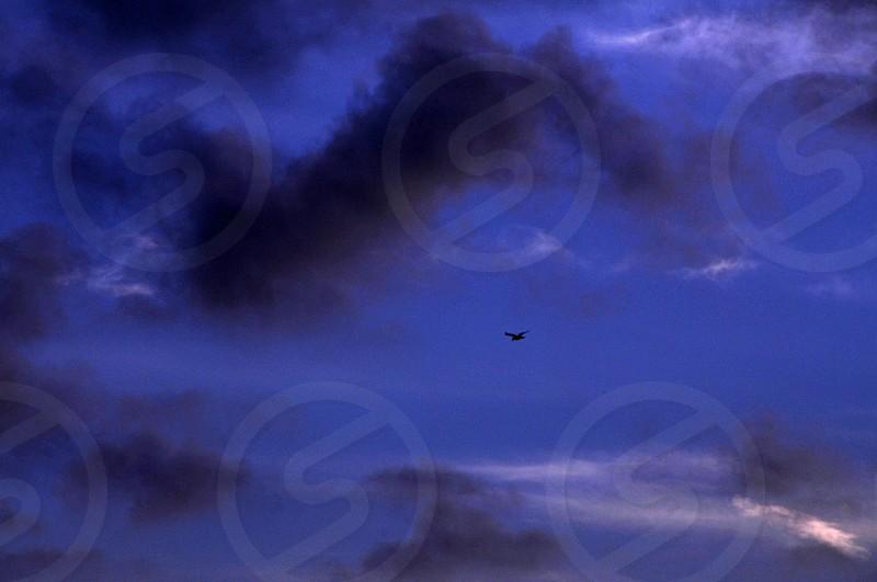 bird flying in storm photo