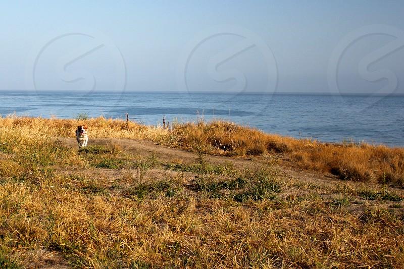 Open field ocean dog puppy photo