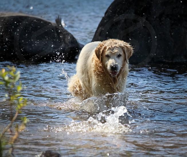 Water splash dog  photo