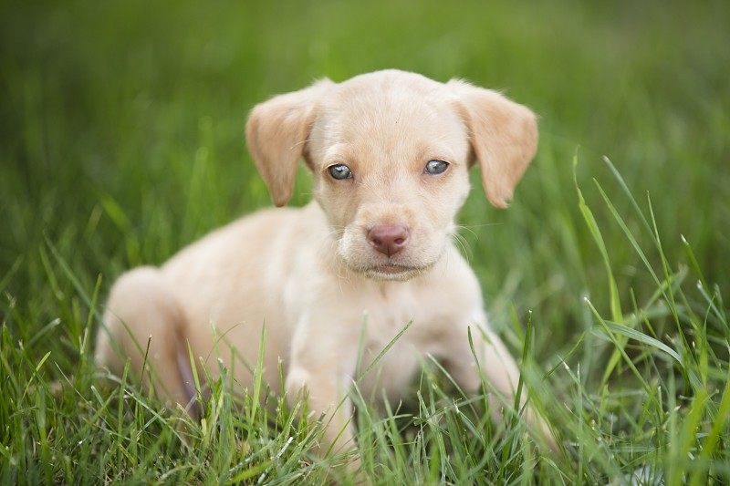 A baby puppy portrait photo