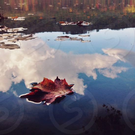 """Float You Like a Cloud"" (Water reflection reflect lake pond leaf maple red cloud blue) photo"