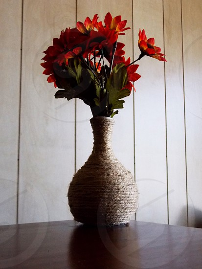 red and green potted plant photo