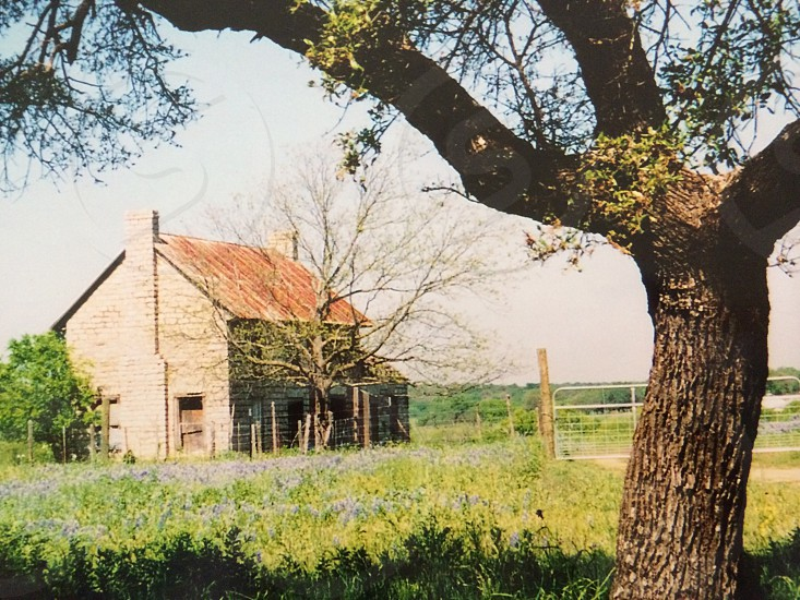 Hill country  photo