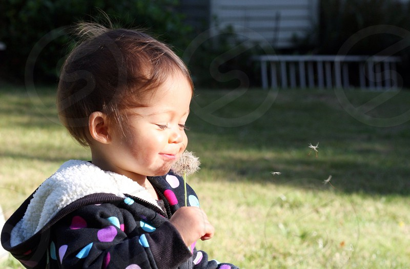 baby holding and blowing dandelion flower photo